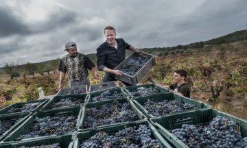 Kissed by the Grape – Film & Wijnproeverij in de Verskade
